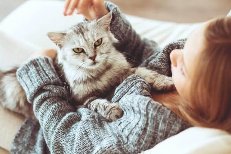 Vilket husdjur passar dig bäst - hund eller katt?
