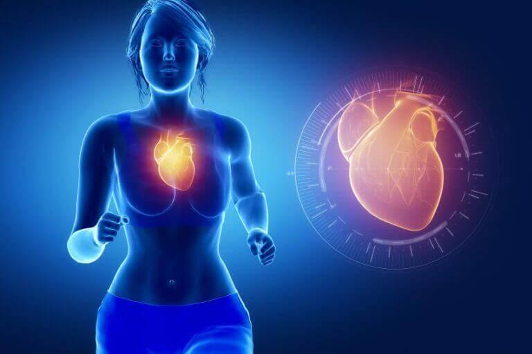 Kardiovaskulär hälsa