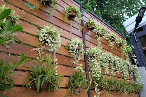 Omvandla en vägg till en vertikal trädgård