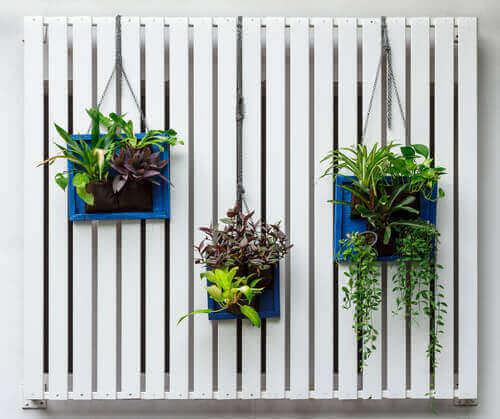 Vit vägg med växter.