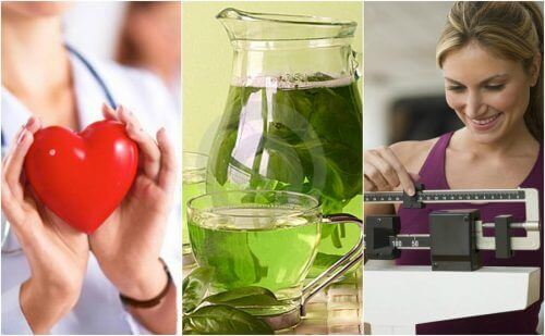 6 stora fördelar med att dricka grönt te