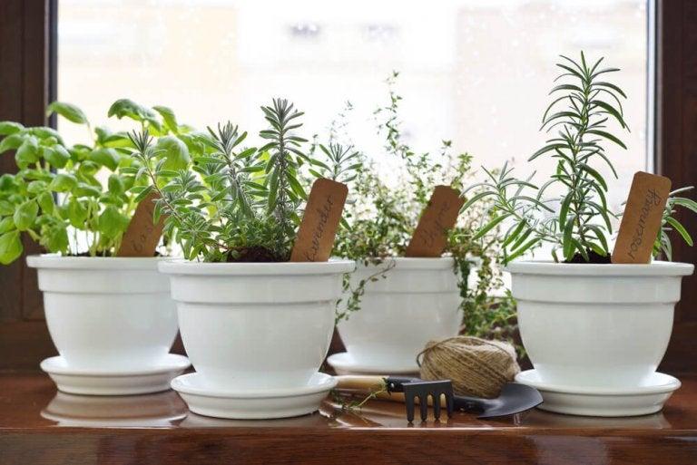 Skapa en egen aromatisk trädgård