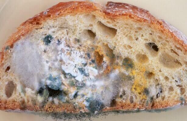 Mögligt bröd.
