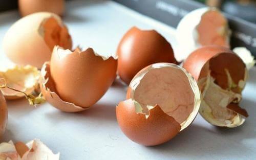 Äggskal kan bli ett utmärkt naturligt gödningsmedel