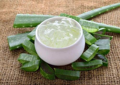 Aloe vera är smärtstillande