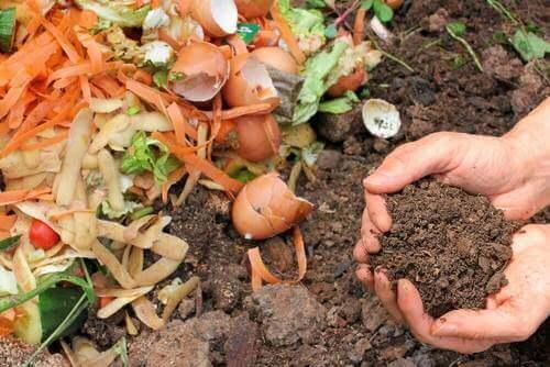 Fem sätt att göra naturligt gödningsmedel för dina växter