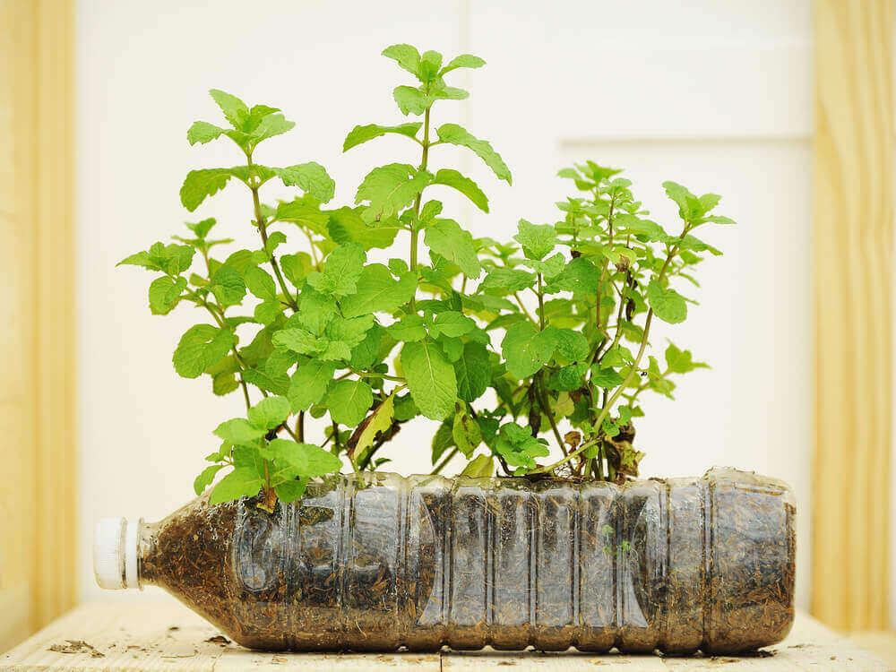 Växt i plastflaska.