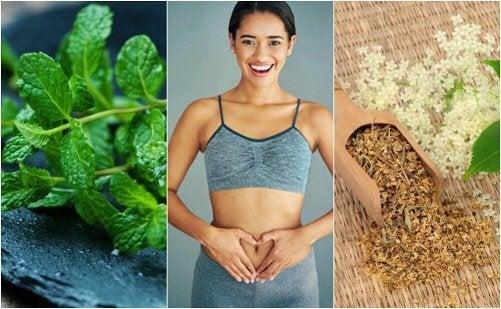 Främja matsmältningen med 6 helande växter