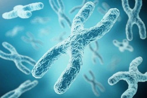 Hur uppstår inaktiveringsprocessen av X-kromosomen?