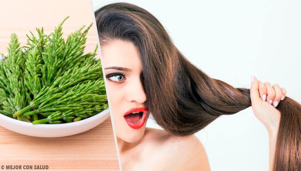 Hur man använder åkerfräken för att förbättra håret