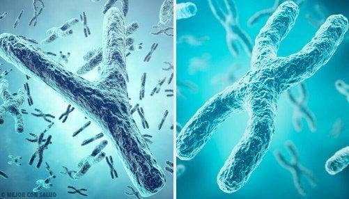 X- och Y-kromosomer: könens genetiska ursprung