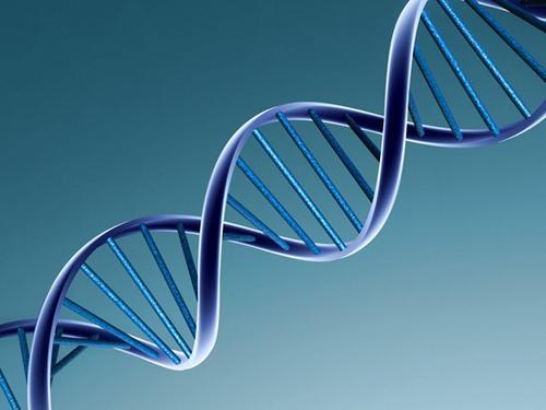 Tvåäggstvillingar har 50% av varandras DNA