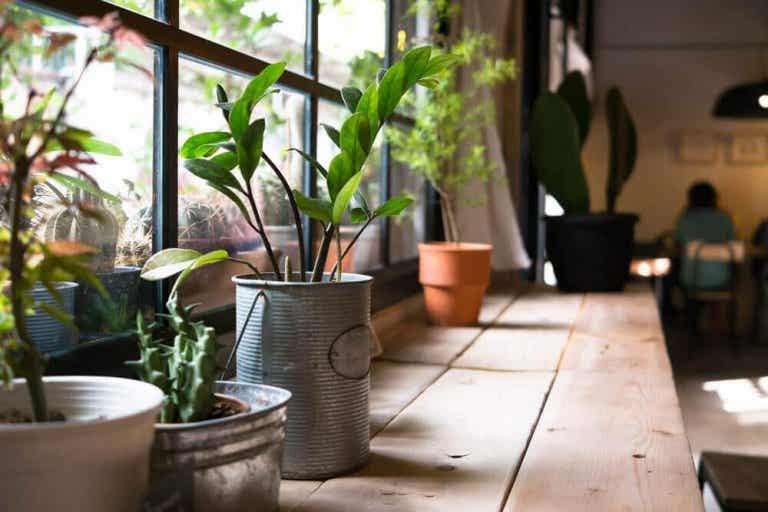 Hälsofördelarna med växter i ditt hem