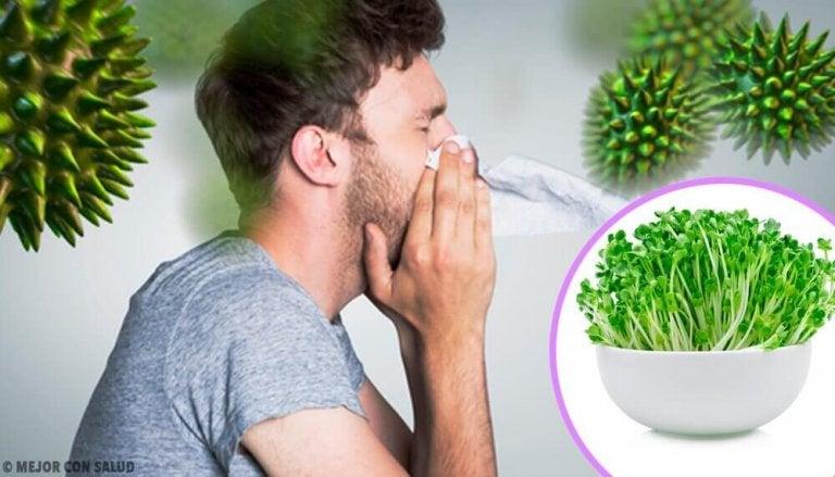 6 nyttiga fördelar med att äta alfalfa