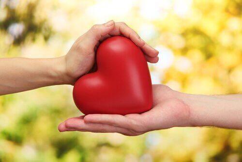 äta alfalfa hjärta