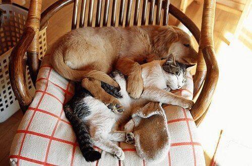 Hund och katt sover