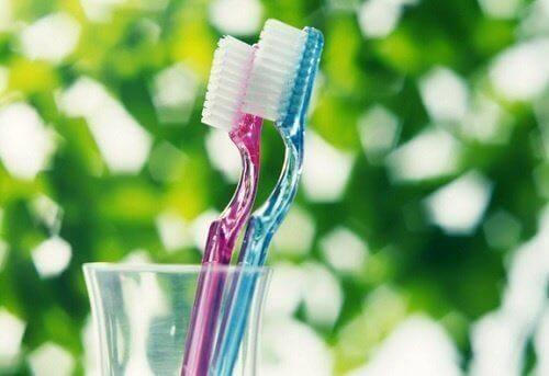 Tandborstar ansamlar bakterier