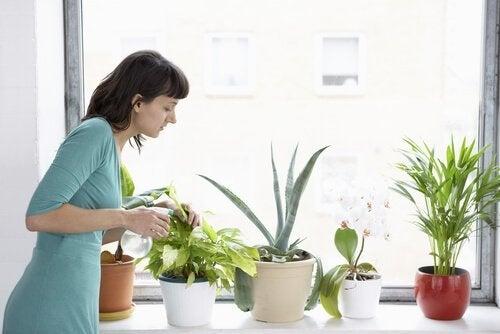 kanel för växter och deras skador