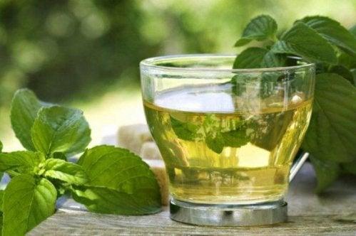 Grönt te med mynta