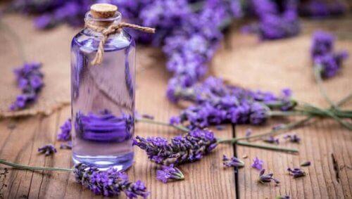 Lavendelblommor och olja som naturligt lindrar spänningshuvudvärk