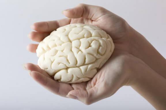 Person som håller modell av hjärna i händerna.