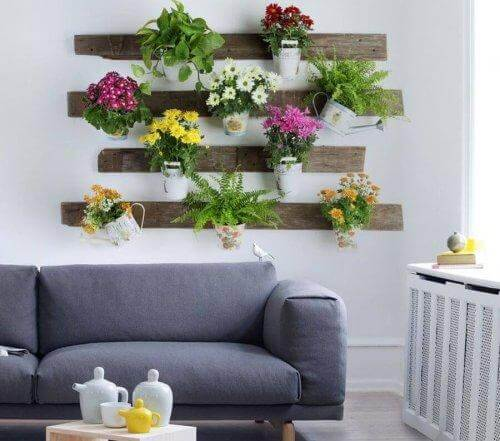 Rengör luften med växter