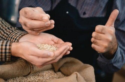 sju fullkorn korn