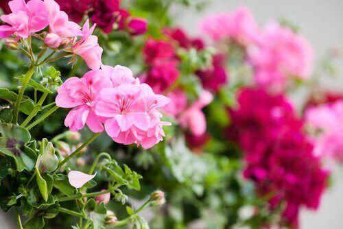 Blommor i olika färger.
