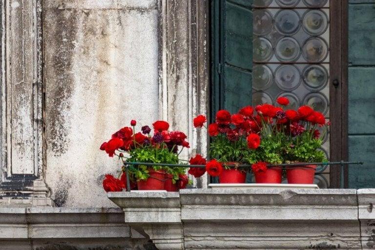 Fem typer av blommor för balkongen