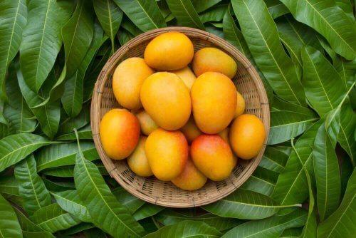 Mango mot förstoppning: fördelar och recept