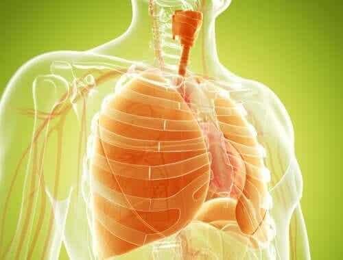 Naturliga kurer för att avgifta lungorna effektivt