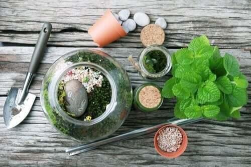 Dekorera din trädgård med ett terrarium