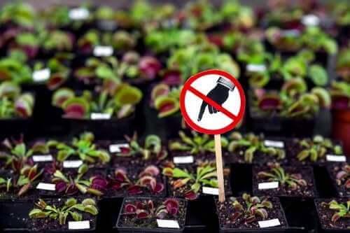 Sex farliga växter du inte bör ha hemma
