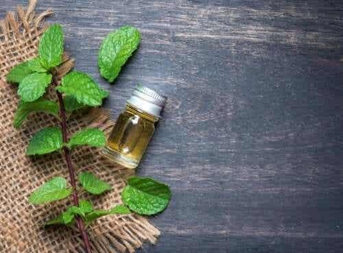 Fördelarna med myntaolja för kroppen