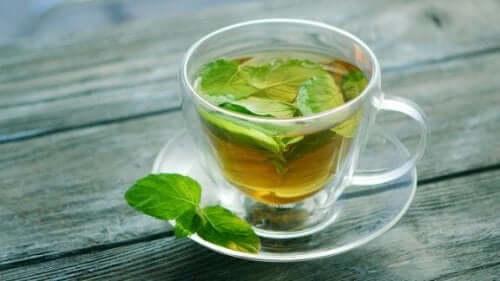Upptäck hälsofördelarna med te på mynta