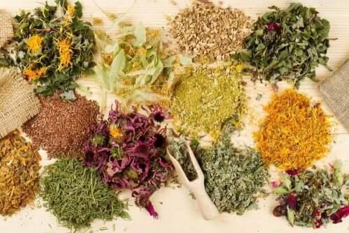 Medicinalväxter mot magsmärta: naturligt och effektivt