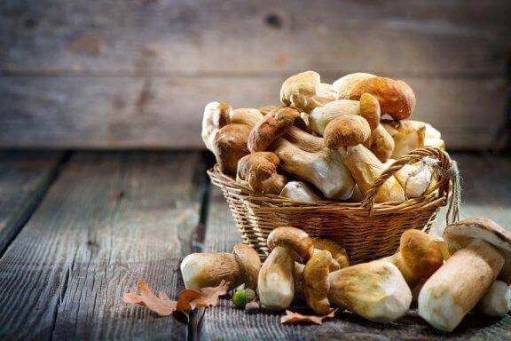5 medicinska svampar som backas upp av vetenskapen