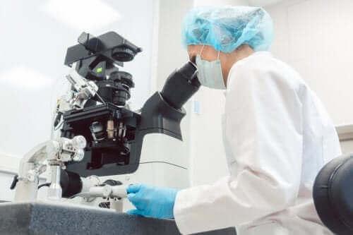 Preimplantatorisk genetisk diagnostik: vad är det?