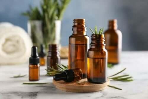 Upptäck fördelarna och användningarna för rosmarin