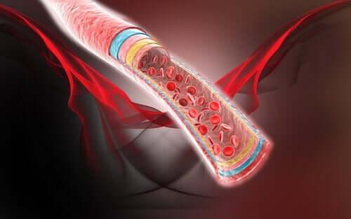 Fyra naturliga kurer för blodcirkulationen