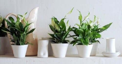 Krukväxter på rad
