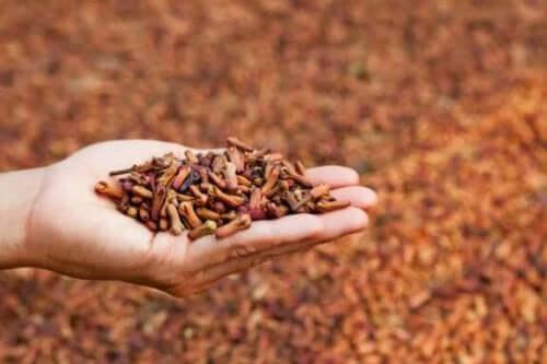 5 medicinska användningar för kryddnejlika