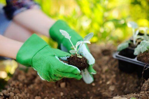 Tips för att plantera om växter på rätt sätt
