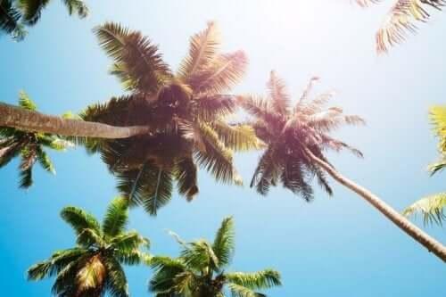 Vinäger från kokospalmer