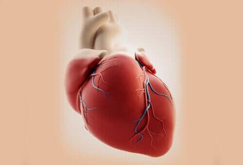 Orsakerna till gemensam artärstam