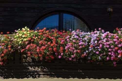 Fem väldoftande blommor för mindre trädgårdar