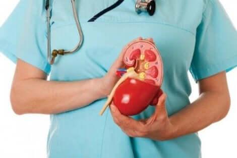 Behandling av proximal renal tubulär acidos