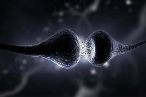 Nervändarna påverkas av myasteni