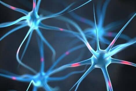 Nervceller i hjärnan