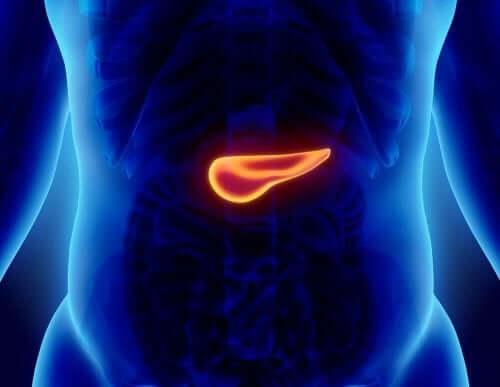 Bukspottkörteln i kroppen